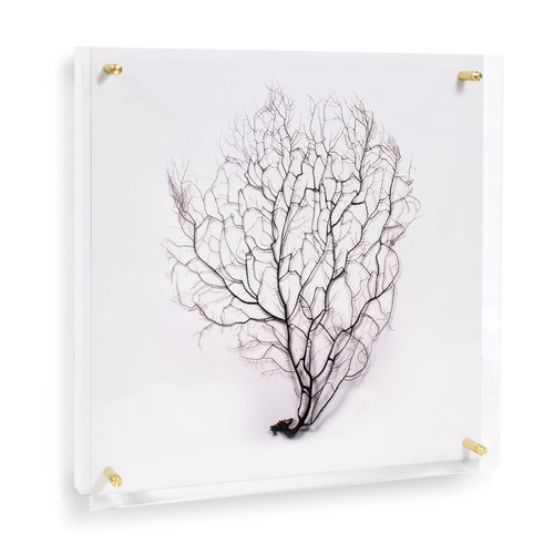 Sea Fan Wall Art on Acrylic